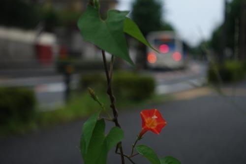 DSC09511.jpg