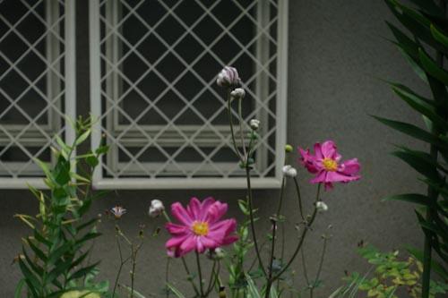 DSC09535.jpg